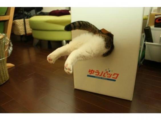 созданию этого почему коты так любят коробки термобелье, обратите