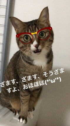 Cat pictures|元祖様に負けられないニャン!メルでーす!